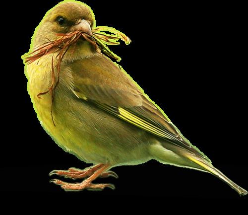 Ptice..... 0_ca42e_6cfe58b4_L