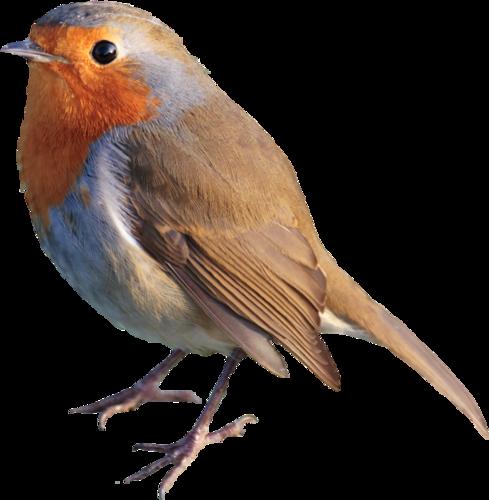 Ptice..... 0_ca43a_986d52e2_L