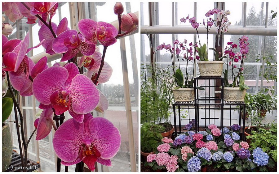 орхидеи.jpg