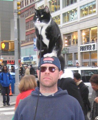 Вот так они и шастают по улицам Нью-Йорка