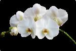 BCD_FloweryDay_el (27).png