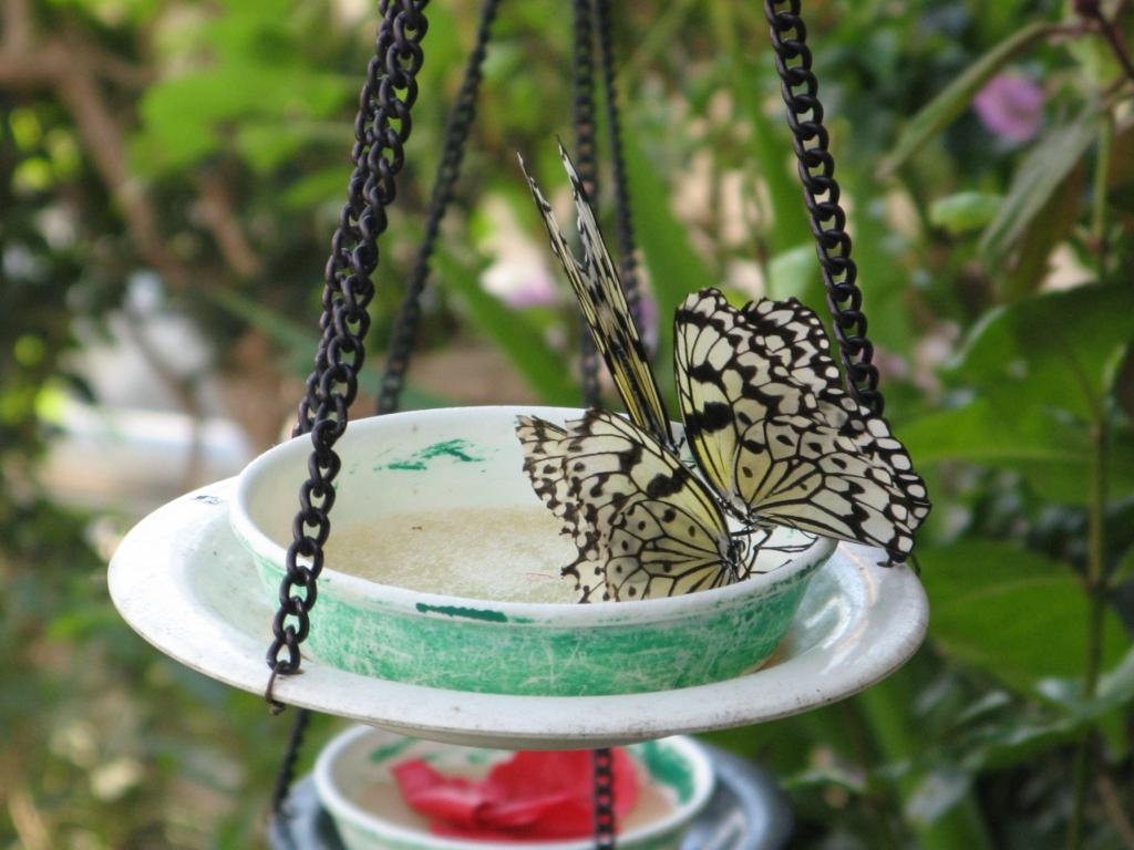 Инсектарий зоопарка Тама в Хино