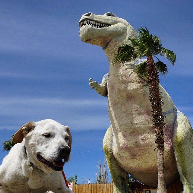 10. По словам Нила, его собака сильна духом и предпочитает путешествовать, а не ждать неизбежного в
