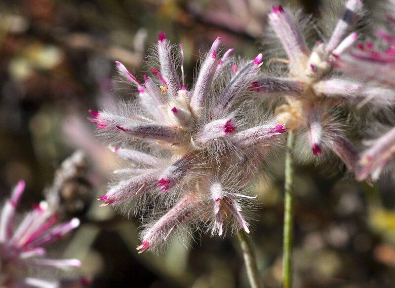 Еще один таинственный цветок