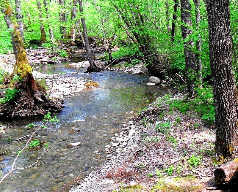 Берег, на реке в лесу ... SAM_7608 - 1.JPG