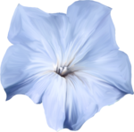 ial_elb_flower3.png