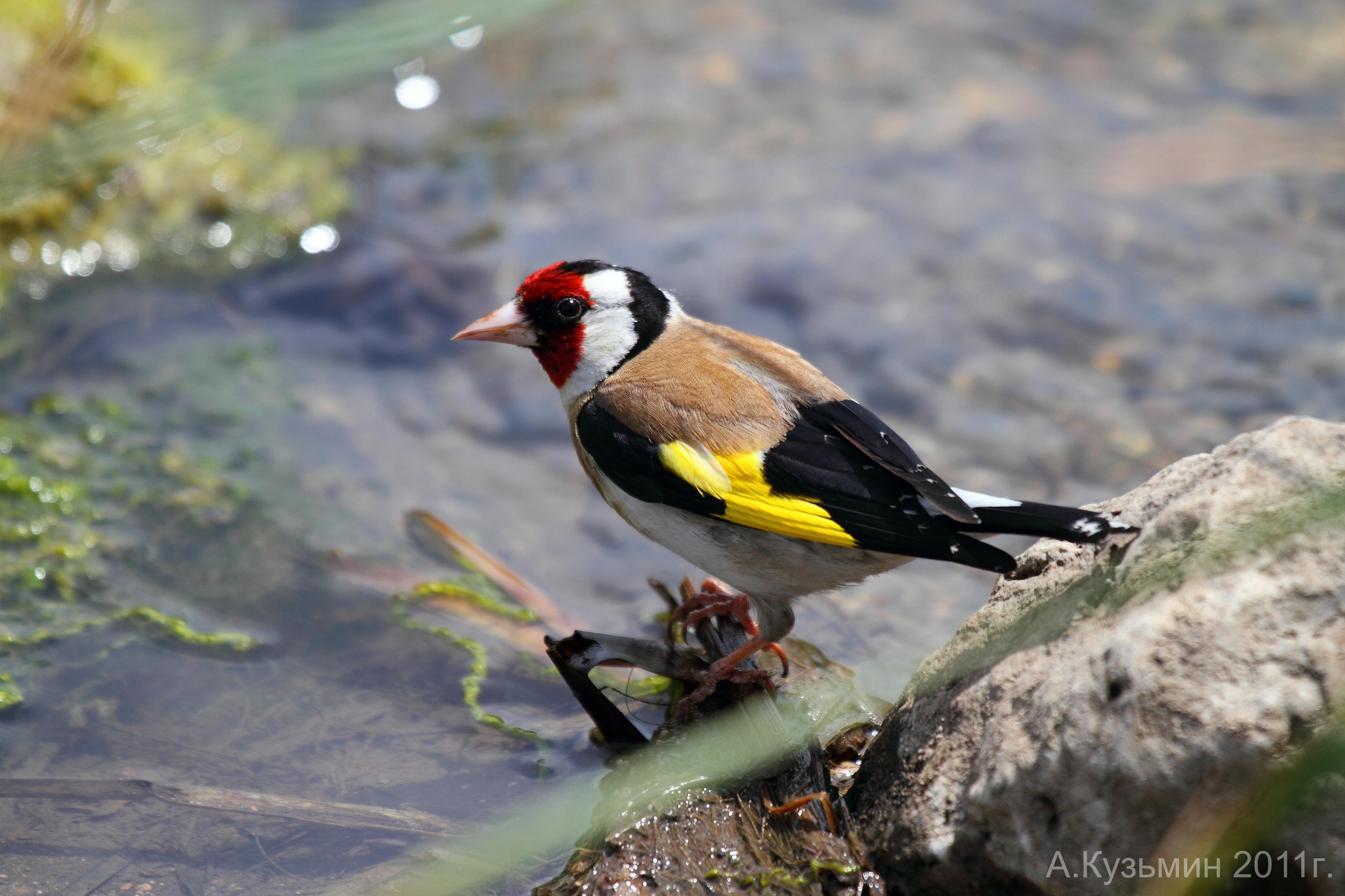 птицы волгоградской области фото и названия является квалификация