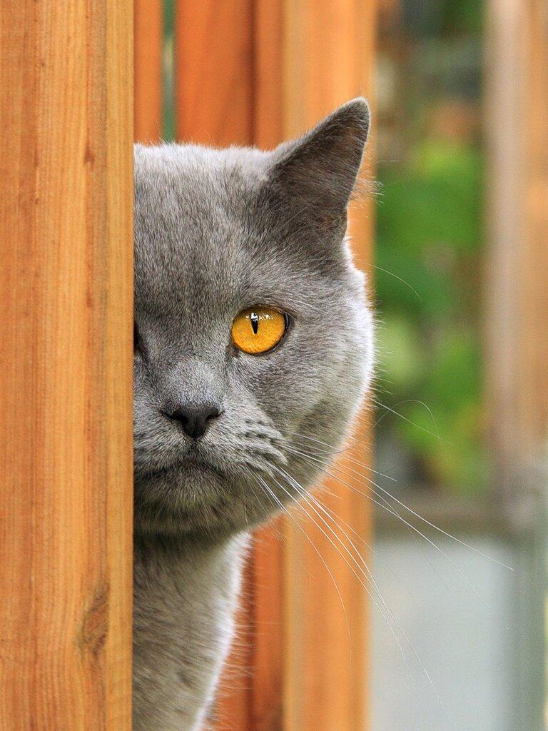 Балконный смотритель