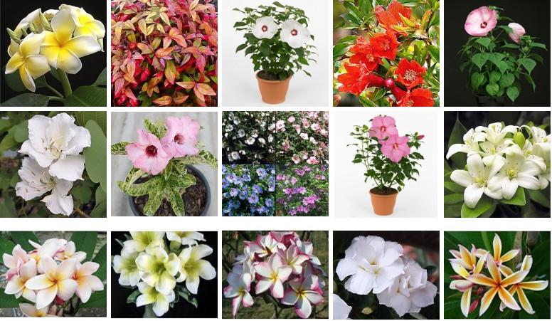Заказать цветы комнатные почтой