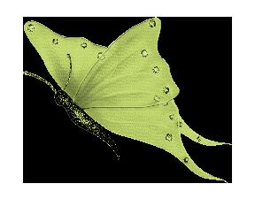 RR_Butterfly2