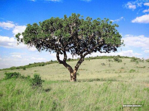 Сосисочное дерево