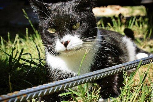 Кошка Буся тщательно проверяет качество арматуры