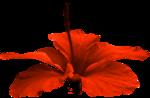«AngelsDesignz_SummerWaves» 0_63eec_c6b63669_S