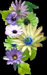 «Violet_Surprise» 0_64057_e44f45e9_S