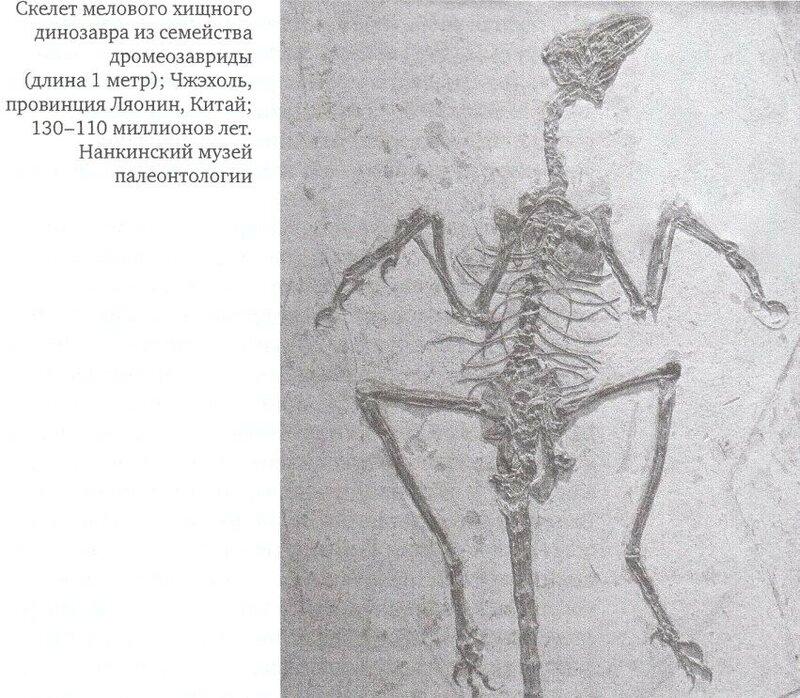 Скелет мелового динозавра.jpg
