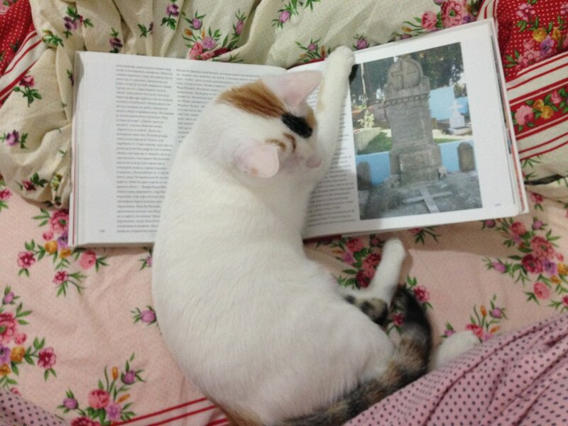 кошка Милка