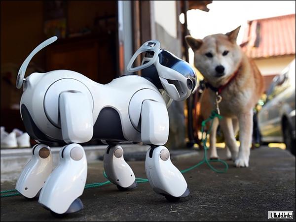 Собака-робот AIBO. Уникальный электронный друг от японской компании Sony