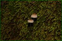 http://img-fotki.yandex.ru/get/44085/15842935.331/0_e58be_9b18ddc7_orig.png