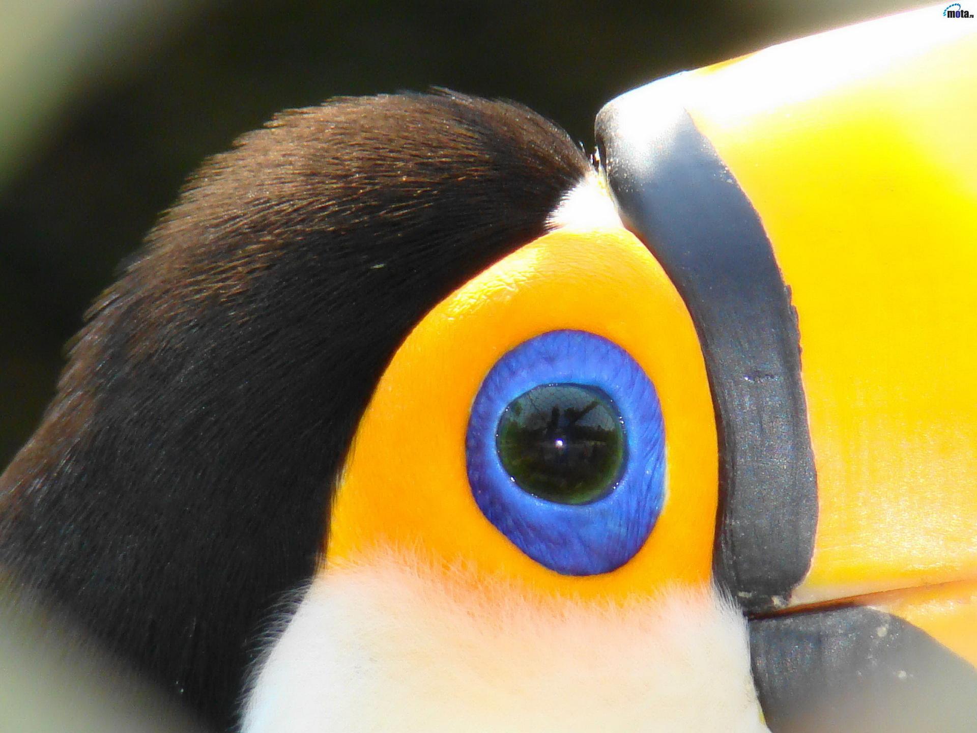 Блакитний очей