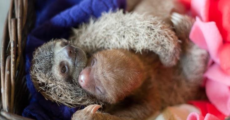 sloth-03.jpg