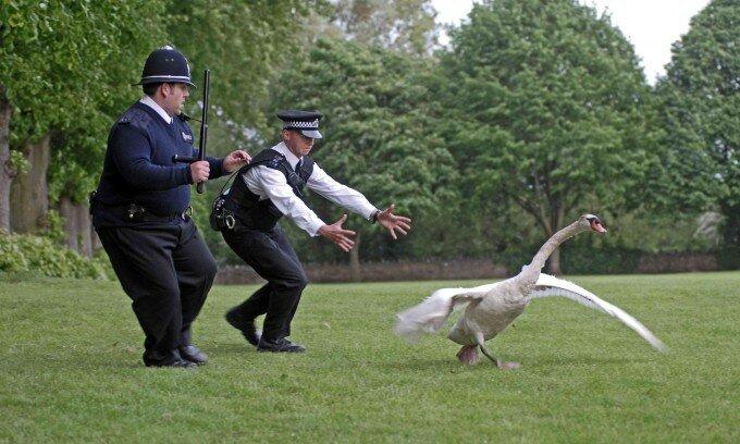Политкорректность: Британские нравы   от шоу уродов до «Пожалуйста, ходите пешком!»