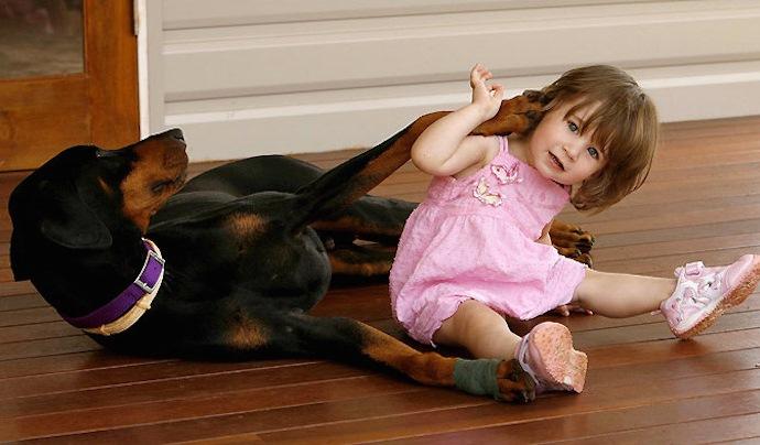 2-летняя девочка играла с доберманом. Внезапно пёс оскалился на малышку… (3 фото)