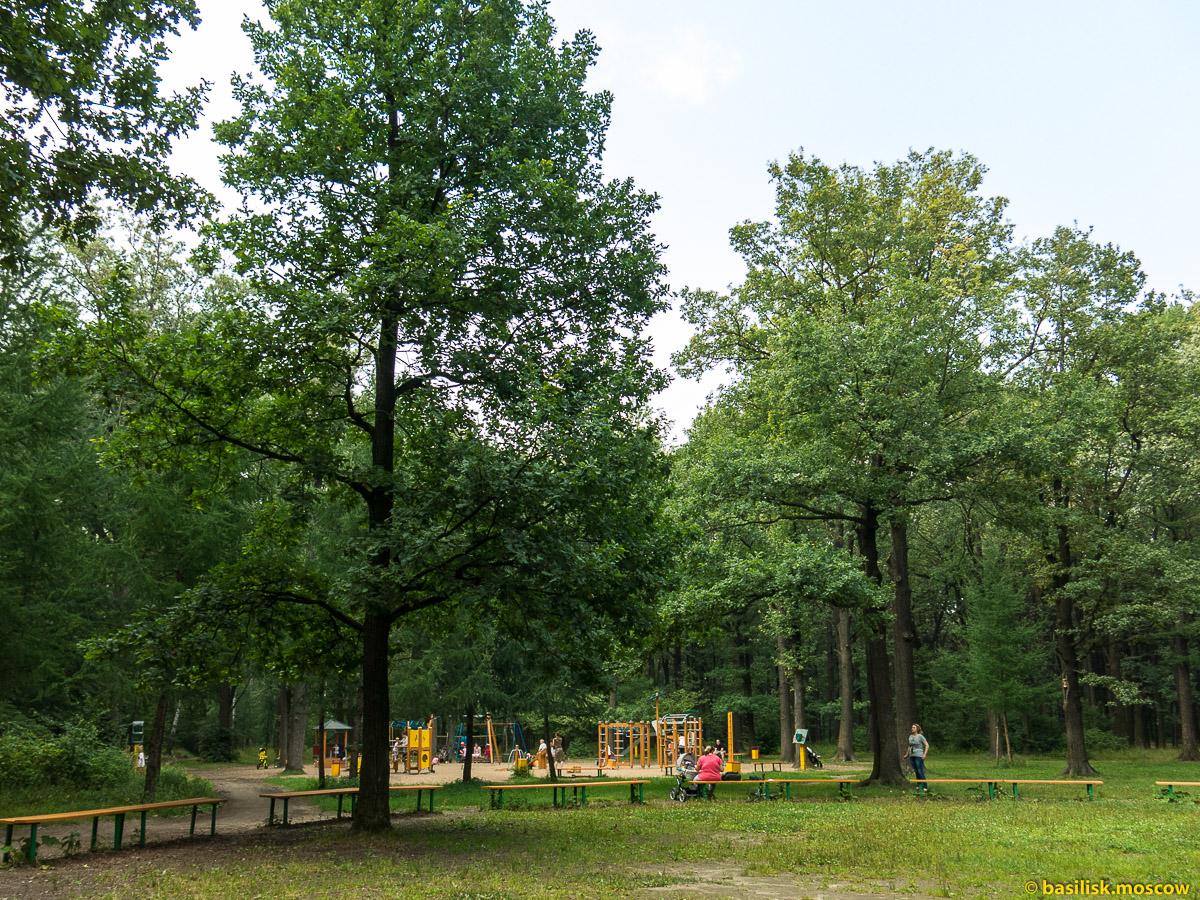 Тимирязевский парк. Москва. Июль 2016
