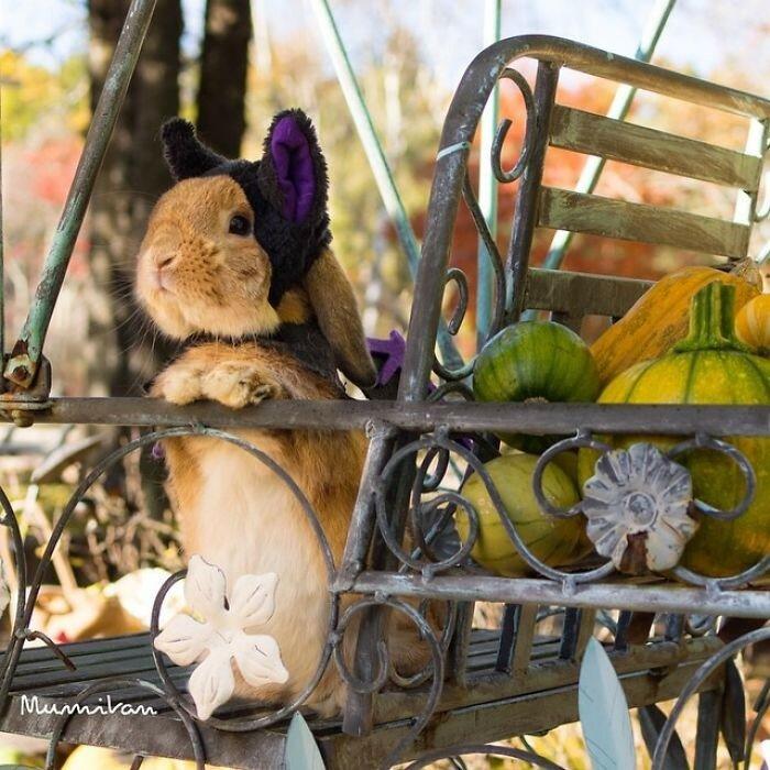 Кролик Пуй-Пуй