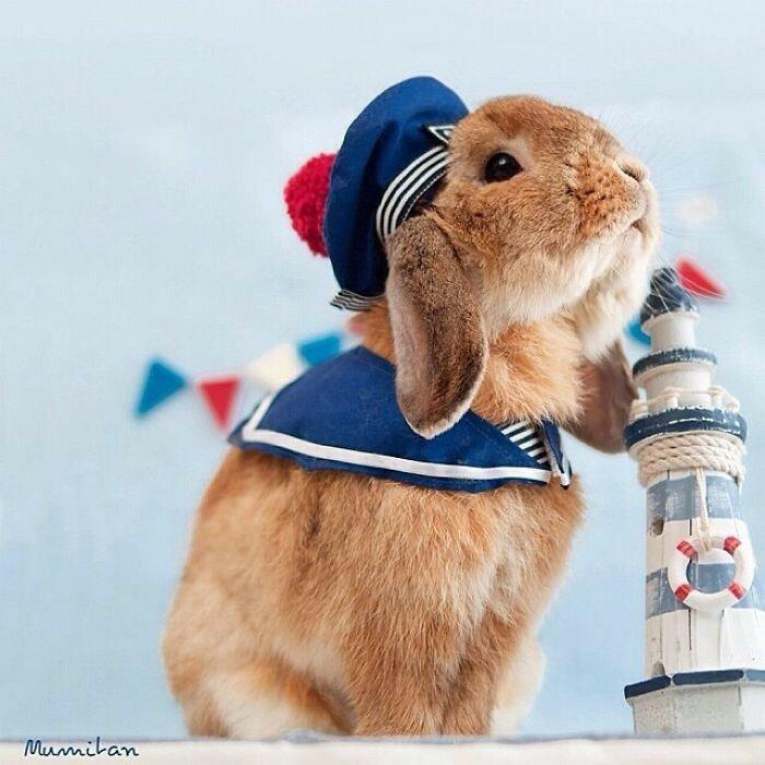 Знаменитый кролик-моряк