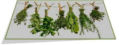 Рецепты с лекарственными травами