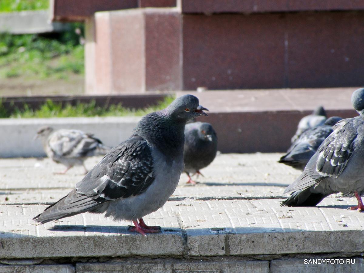 Фотосессия возле памятника Неплюеву Ивану Ивановичу