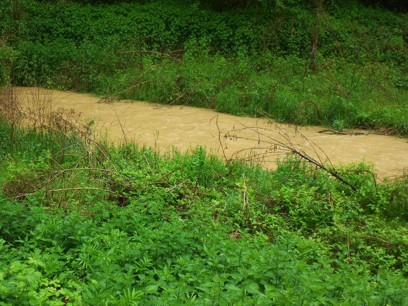 оранжевая вода в ручье после дождя