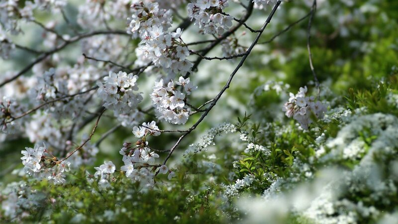 blossoms-on-the-tree-28367.jpg