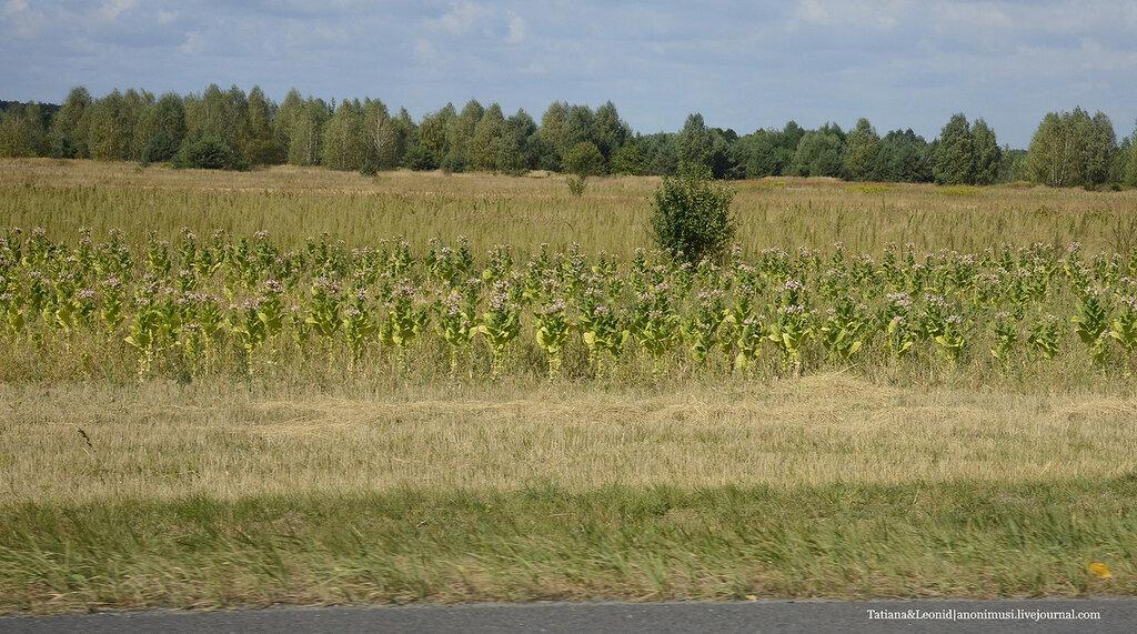 Польские пейзажи