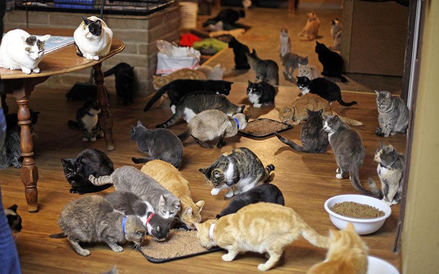 Жить более с чем 1000 котами не было ее целью. Однако благодаря ее доброму сердцу огромное количеств