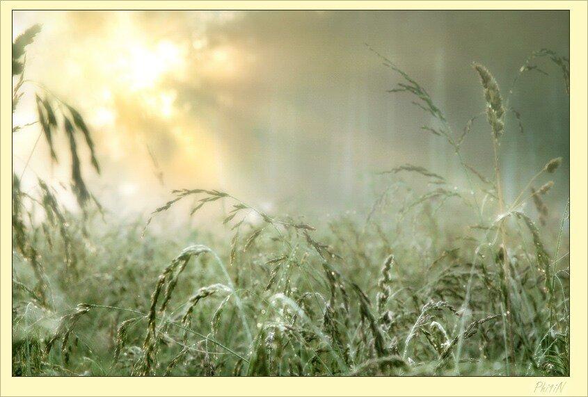 Утро Солнечное Счастья Тенью...