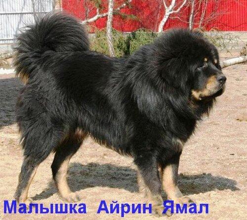 http://img-fotki.yandex.ru/get/4409/6307740.3/0_7531d_594611f_L.jpg