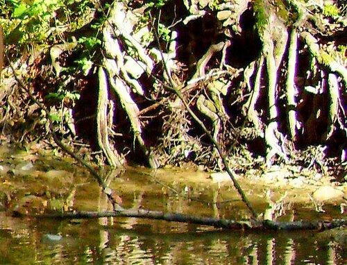 11 октября 2008, под Горячим Ключом, на Природе (169).JPG