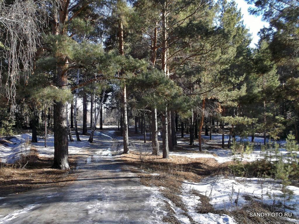 Обстановка в лесу на ГРЭСе