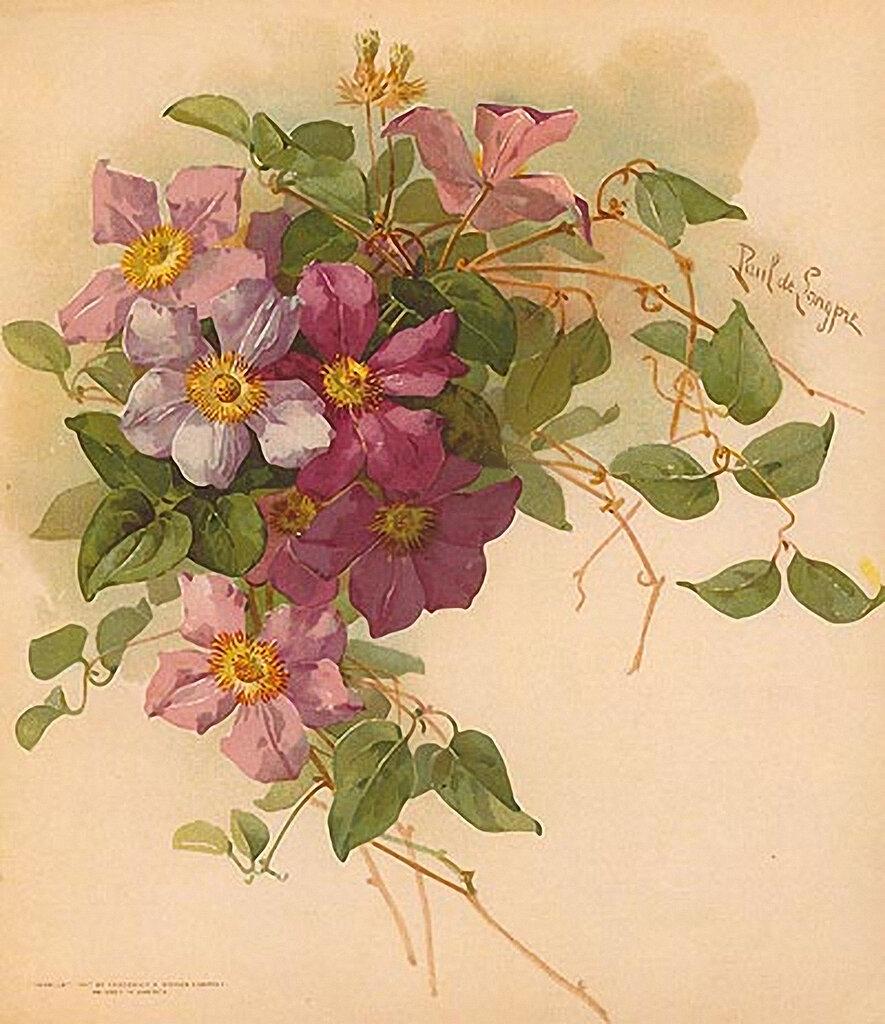 Винтажные картинки для декупажа цветы 1