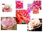 rose5b.png