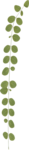 ial_llv_leaf.png