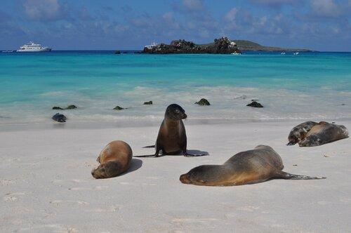На диком пляже Галапагоса.