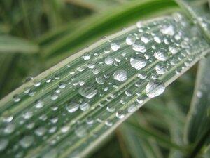 После августовского дождя.