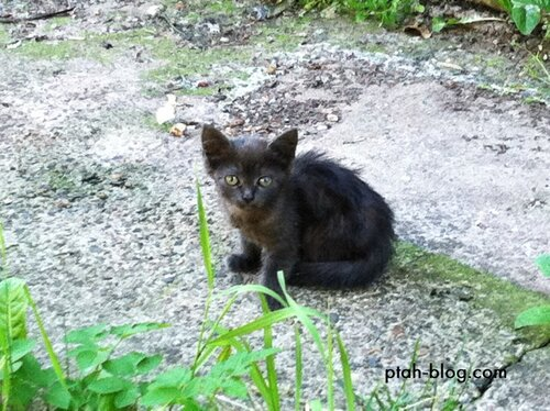 бокситогорск, кот