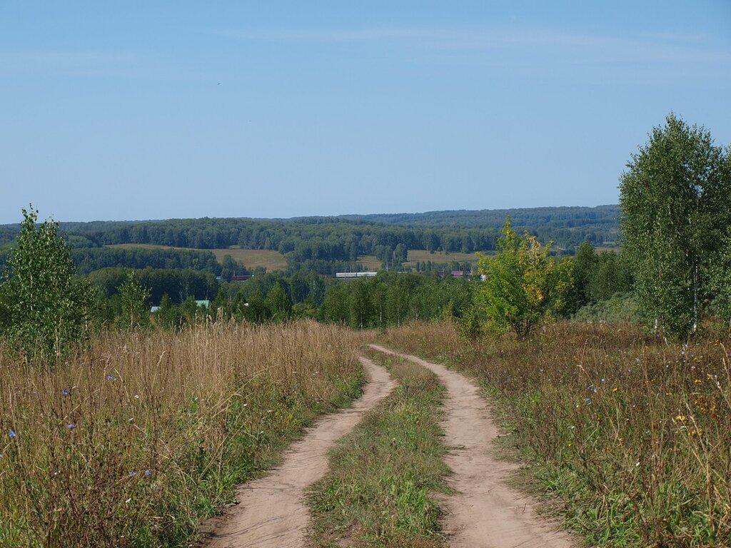 Клубничные поляны и грибные леса в окрестностях Новосибирска. WOW 30 Май 2015 22:59 первое