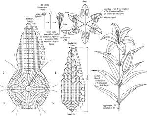 схема к лилии (700x553, 112Kb) .