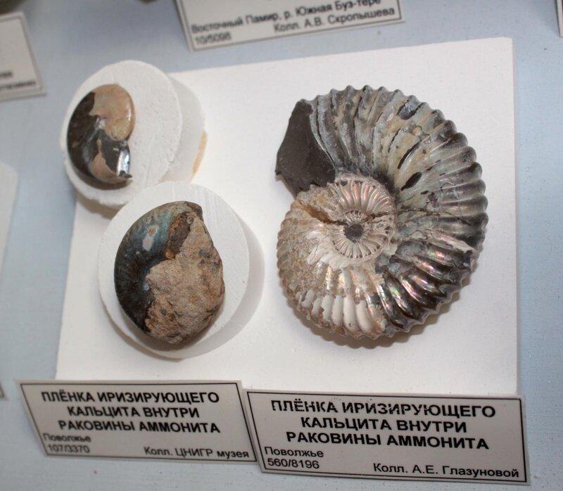 Плёнка иризирующего кальцита внутри раковины аммонита