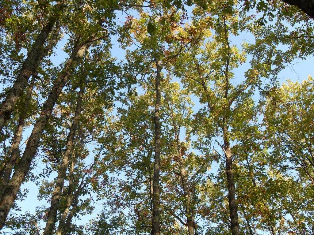 12 октября 2008, под Горячим Ключом, деревья (92).JPG
