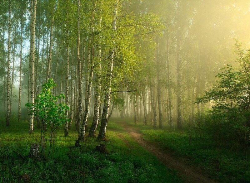 фотообои утро в весеннем лесу статье приведены несколько